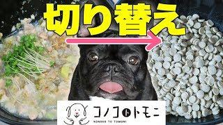 【このこのごはん】手作り犬ご飯からドッグフードに切り替えるドキュメンタリー
