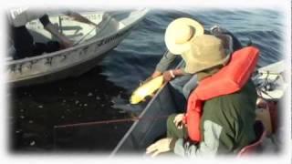 Pescaria na Pousada Anhuma