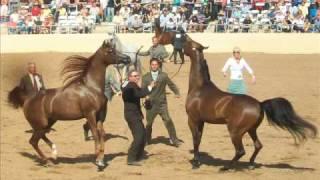 Scottsdale Arabian Horse Show 2010