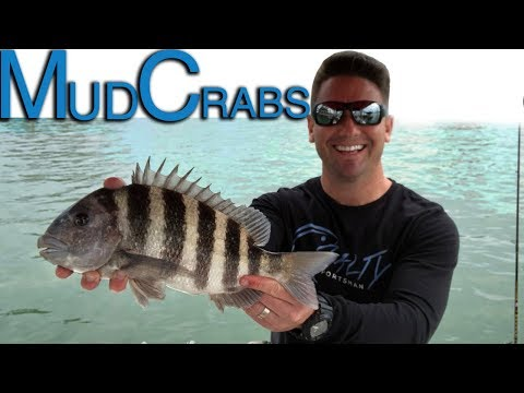 How To Catch Sheepshead | Best Bait To Use | Fishing For Sheepshead Inshore Fishing