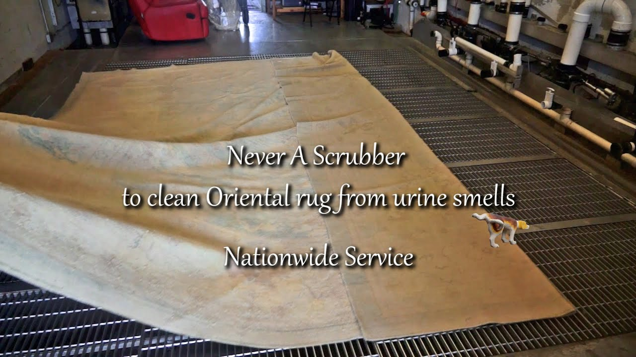 Never a Scrubber to Clean Oriental rug from Urine Odor