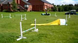 Deaf Dog Horus' First Jumping Course