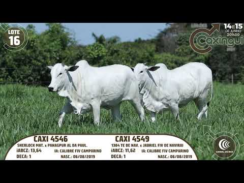 LOTE 16   CAXI 4546, CAXI 4549