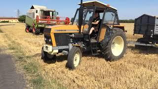 Wyciąganie pełnej przyczepy pszenicy z pola ! Ursus 1012 na blokadzie! ENGINE SOUND!