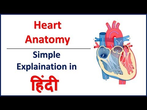 Anatomy (Structure) of Heart in Hindi | Bhushan Science