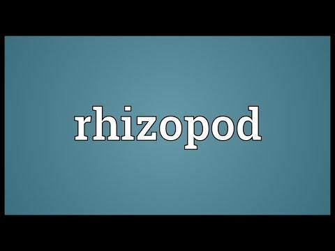 Header of rhizopod