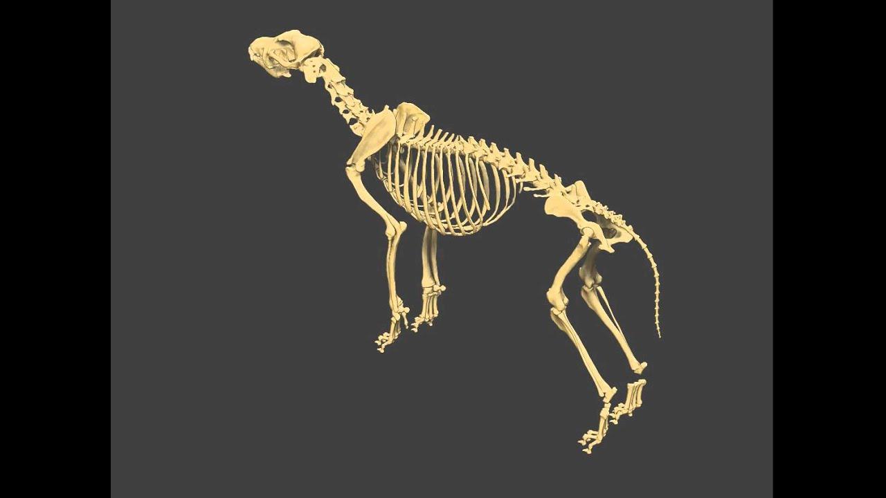 ZBrush Wolf Skeleton - YouTube