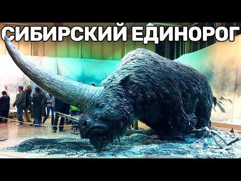 10 Вымерших Животных,