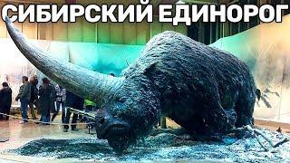 10 Вымерших Животных, Которых Воскресят в Скором Времени