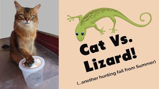 SUMMER CATCHES A LIZARD? Cat and Lizard Video