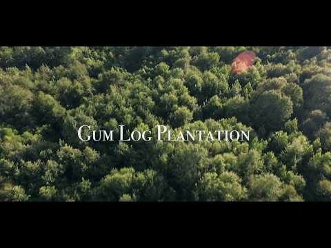 Gumlog Plantation - Georgia Hog Hunting Destination