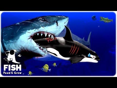 BATALHA ÉPICA DE TUBARÃO VS ORCA - FEED AND GROW FISH (CONHECENDO O JOGO) PT-BR