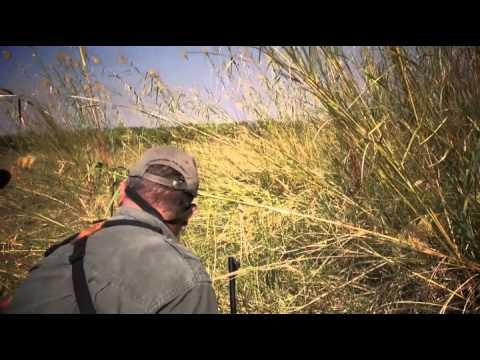 Botswana Bull Elephant Hunting with the Kimber Caprivi