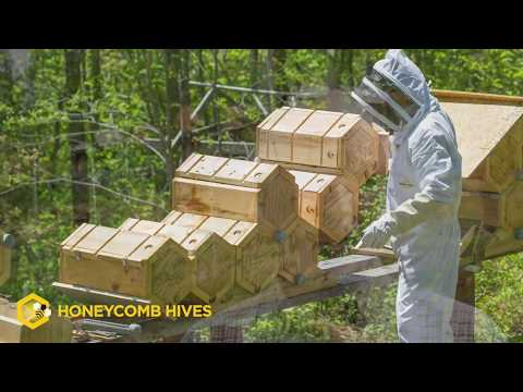 Beekeeping Reimagined  Honeycomb Hives  Fold Hives