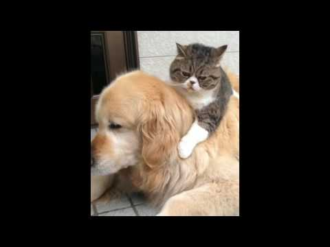 NEW Funny Cat Videos 2016 - YouTube Funny Cat Videos Youtube