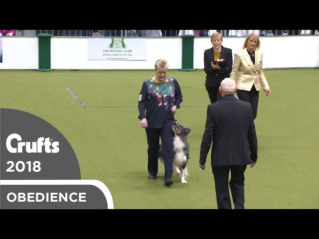 Obedience - Dog Championship - Part 2 | Crufts 2018