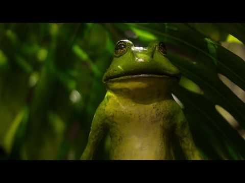 Vidéo Démo anglophone - Fictions