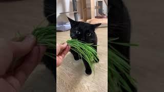 고양이들에게 풀을 뭉탱이로 줘봄