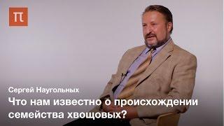 Появление и эволюция хвощей Сергей Наугольных