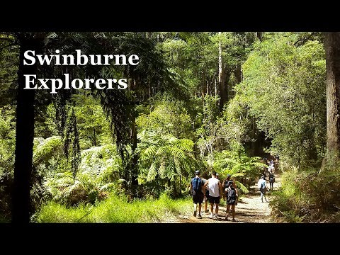 Swinburne Explorers - Dandenong Ranges National Park