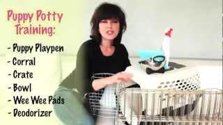 Puppy Potty Training Tips!