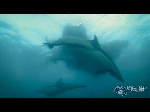 Offshore Africa Port St Johns sardine run 2019