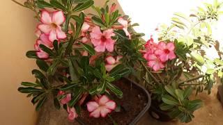 Melhor Adubo Para Floração de Plantas
