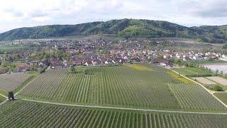 Apfelblüte in Wahlwies - Luftvideo