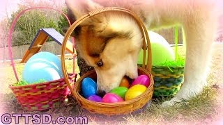 My Dogs Easter Egg Hunting