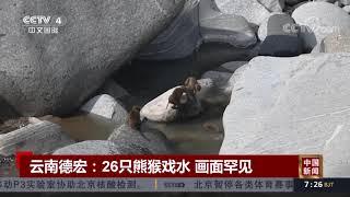 [中国新闻] 云南德宏:26只熊猴戏水 画面罕见 | CCTV中文国际