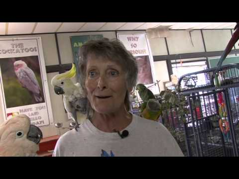 World Parrot Refuge Pt 4  Caring for the Old & Sick- Wendy Huntbatch