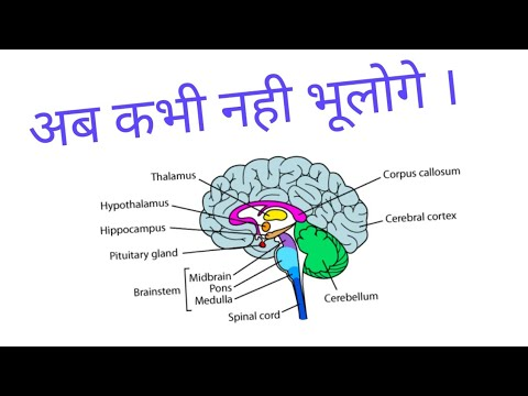 trick ||brain parts and their functions|| - youtube, Human Body