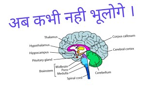 Video BEST TRICK || TRICK  ||Brain Parts and their Functions|| download MP3, 3GP, MP4, WEBM, AVI, FLV Juni 2018