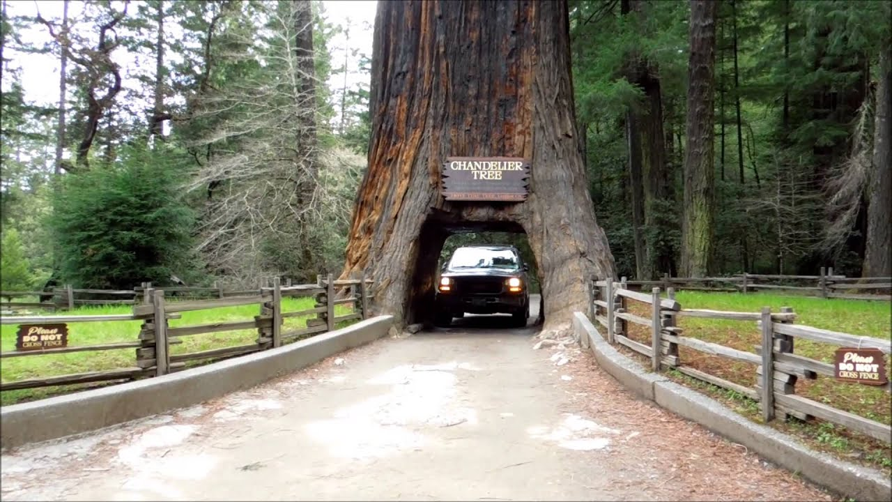 Drive thru giant redwood tree video leggett ca reviews california drive thru giant redwood tree video leggett ca reviews california parks youtube arubaitofo Images
