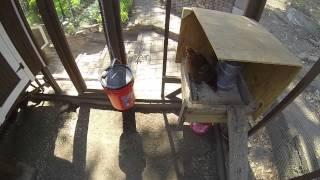 Bulk Chicken Auto Feeder & Waterer No Waste DIY