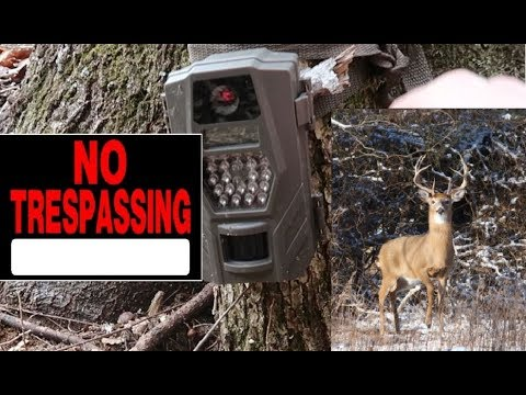 Trespassers, Big Bucks, And More Surprises - Trail Camera Footage