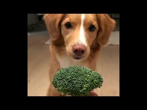 | 9GAG | MoxietheToller loves broccoli.