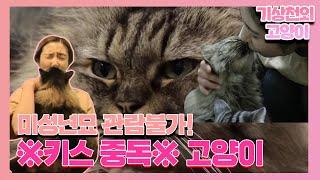 ♨미성년묘 관람불가♨ '키스 중독' 고양이 I TV동물농장 (Animal Farm)   SBS Story