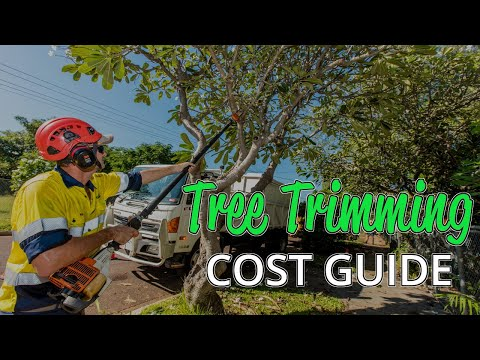 what-is-the-average-cost-of-tree-trimming?-(a-quick-guide)
