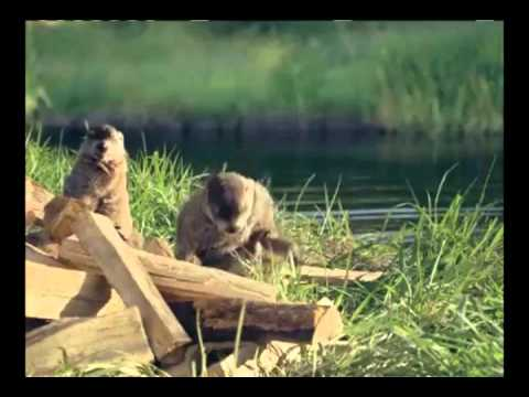 Wood Chuck Geico Commercial - YouTube
