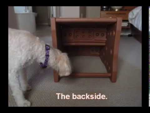 Pet Gear Easy Step II Stairs Review