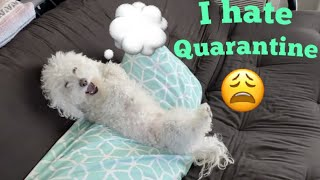 Thoughts Dogs Have During Quarantine!