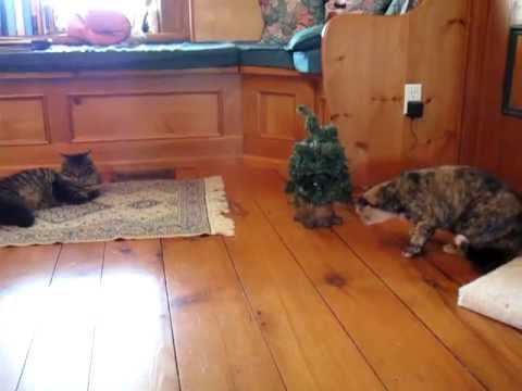 Cat Surprised by Singing Christmas Tree