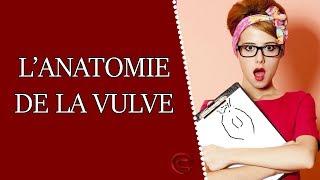 L'anatomie de la vulve