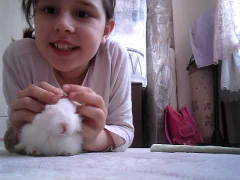 Duyuru  tavşan. Aldım  ama