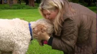 Paul O Grady For The Love Of Dogs S03E01 480p HDTV x264 mSD