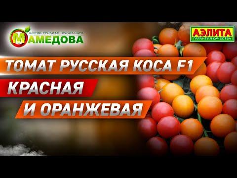 РУССКАЯ КОСА F1 - Красные и Оранжевые Томаты