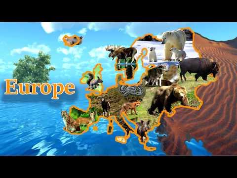 European Animals