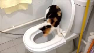 Чудо-лоток для приучения котов к унитазу за 12 дней