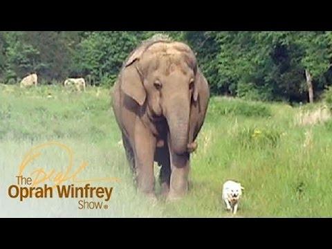 Why Would an Elephant Visit a Bedridden Dog? | The Oprah Winfrey Show | Oprah Winfrey Network